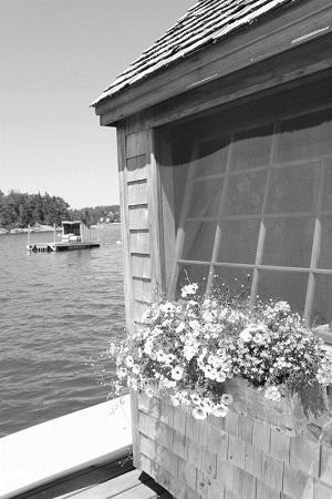 Deborah Joy Corey: A shack of one's own